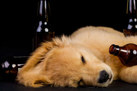passed out: drunk dog