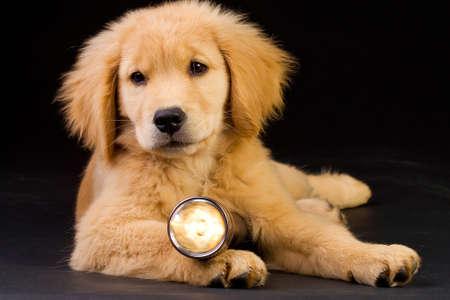 rescue dog Banco de Imagens