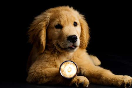 Puppy Dog with a flashlight Banco de Imagens - 10897789