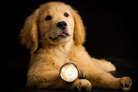 Puppy Hond met een zaklamp Stockfoto