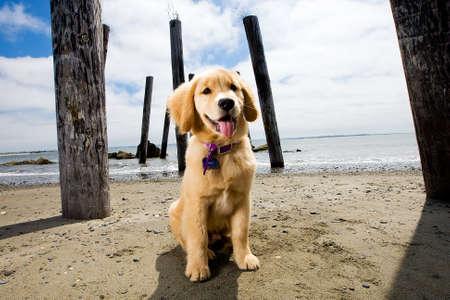 해변에서 귀여운 강아지 스톡 콘텐츠