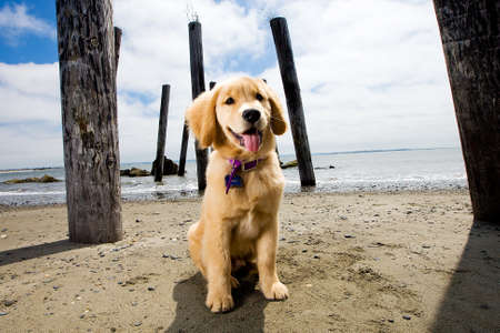 cute puppy at the beach Stock Photo