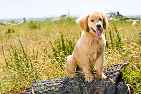 Hübscher Hund Standard-Bild - 10741234