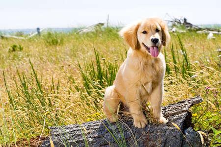 Joli chien Banque d'images - 10741234