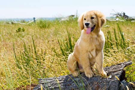 cute dog Stockfoto