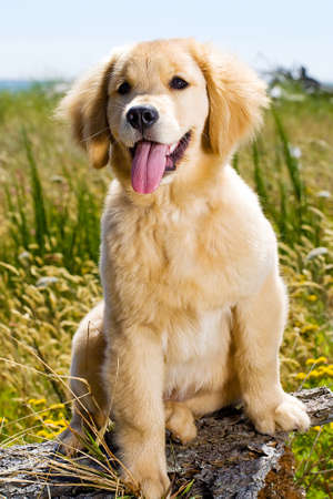 Pretty Dog photo