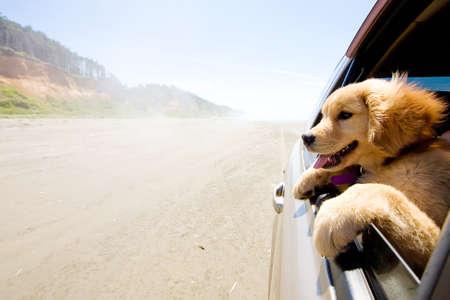 Puppy hond met hoofd uit autoraam op het strand