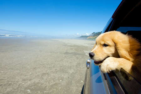 Puppy dog with head out car window at the beach photo