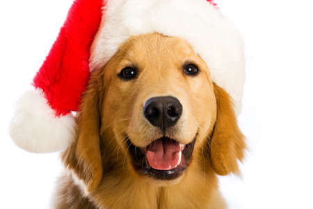pure breed: Christmas Dog