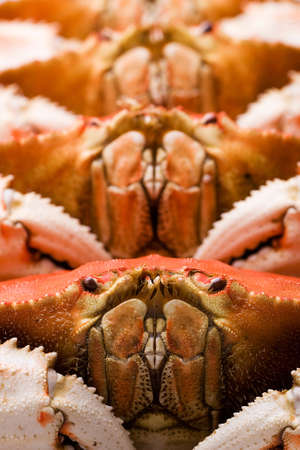 dungeness: Fresh Dungeness Crab