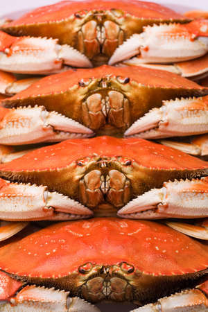 dungeness: Dungeness Crab for Dinner Stock Photo