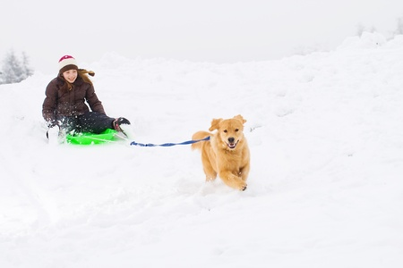 dog pulling child down a hill on a snow sled photo