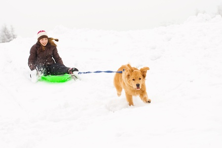 golden retriever dog pulling child on a snow sled photo
