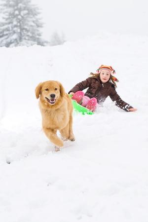 sledding: golden retriever dog pulling child on a snow sled Stock Photo
