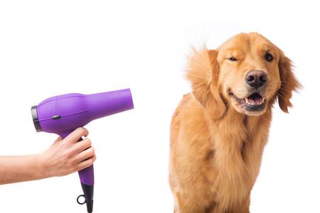 Groomer using blowdryer on a dog Stockfoto