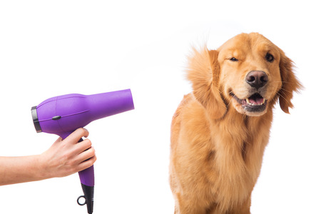 Groomer using blowdryer on a dog Stock fotó - 35607531