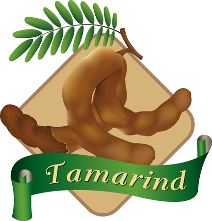 tamarindo: tamarindo ilustración vectorial infografía