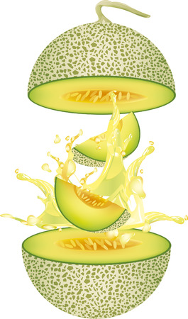 cantaloupe melon  vector illustration Illustration