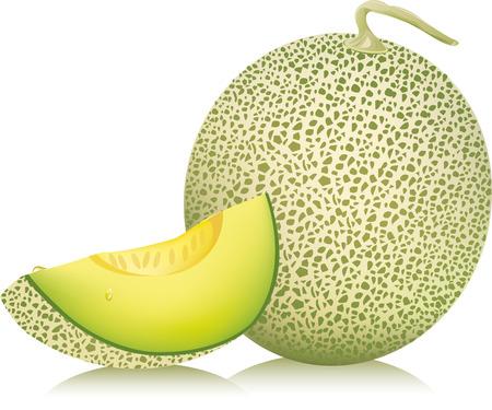 cantaloupe meloen vector illustratie Stock Illustratie