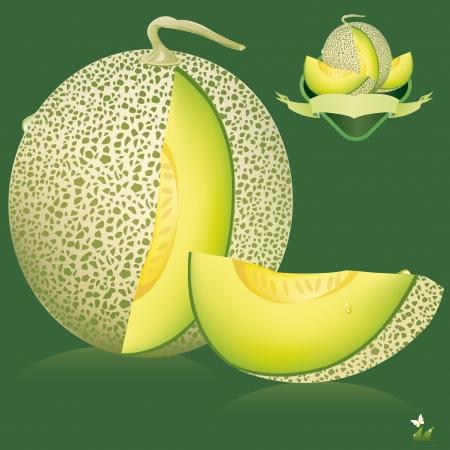 cantaloupe melon  vector illustration Vector