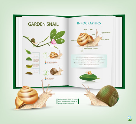 mucus: Book of Knowledge Various types of live snails
