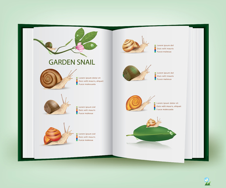 land slide: Book of Knowledge Various types of live snails