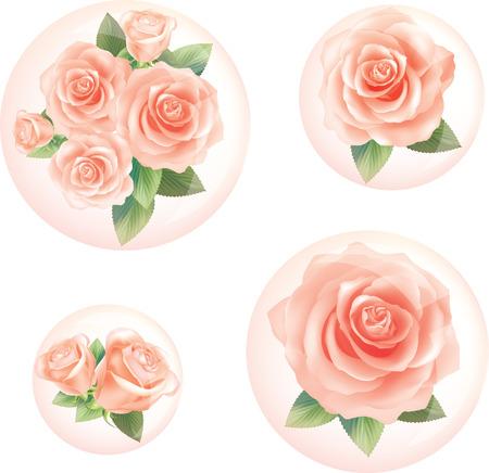 Orange Rose in bubbles. illustration vector
