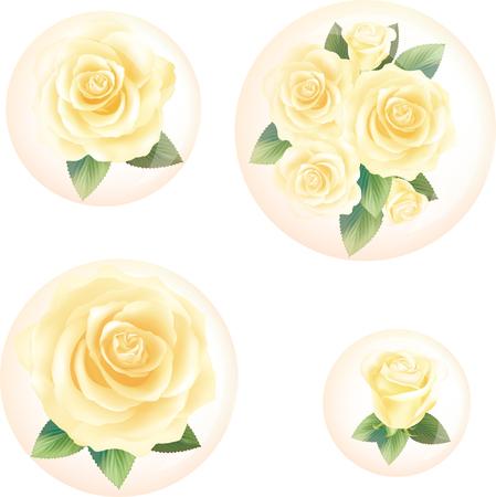 Yellow Rose in bubbles set illustration vector Illustration