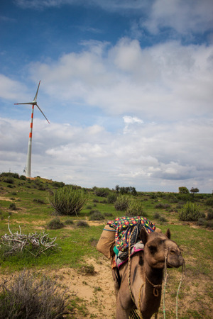 thar: Camel and wind power plants at Thar desert in Rajasthan, India