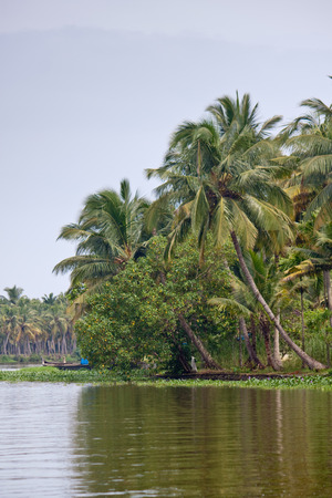 backwaters: Palms along canals and lakes in Backwaters, Kerala, India
