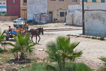 livestock sector: NADOR, MOROCCO - JULY 26: Horse cart with vegetables on July 26, 2010 in Nador, Morocco. The city is a Mediterranean port and major trading center. It has more than 180,000 inhabitants.