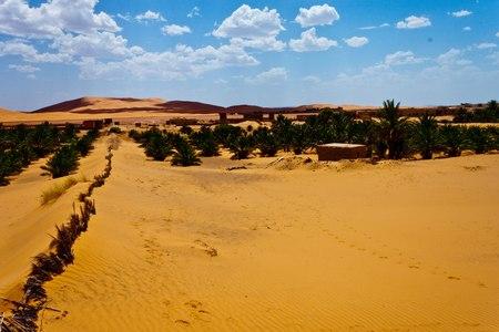 erg chebbi: Palms in desert at Erg Chebbi, Morocco