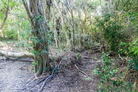 corrientes: Jungle in Nature Reserve Esteros del Ibera, Argentina