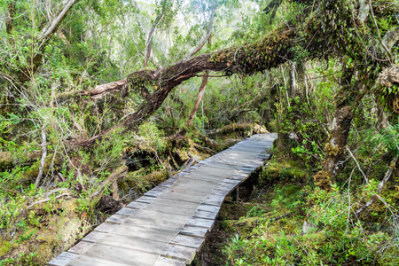 boardwalk trail: Boardwalk on a trekking trail in a forest in National Park Chiloe, Chile