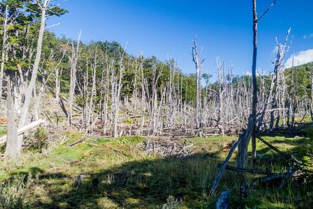 tierra del fuego: Forest in National Park Tierra del Fuego, Argentina