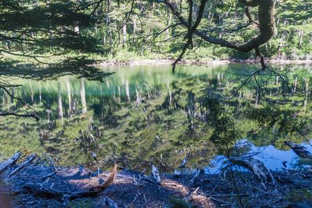 lago: Lago Chico lake in National Park Huerquehue, Chile Stock Photo