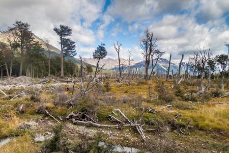 fuego: Forest at Tierra del Fuego, Argentina