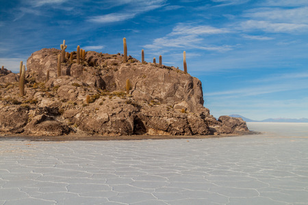 incahuasi: Isla Incahuasi (Isla del Pescado) in the middle of the worlds biggest salt plain Salar de Uyuni, Bolivia