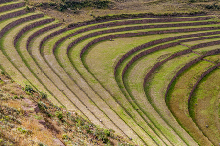 pisac: Inca agricultural terraces in Pisac, Sacred Valley, Peru Stock Photo