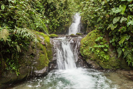 verdant: Small waterfall in Nambillo Cloud Forest Reserve near Mindo, Ecuador.