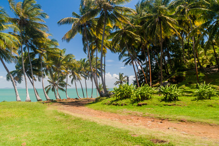 political prisoner: Road at Ile Royale, one of the islands of Iles du Salut (Islands of Salvation) in French Guiana Stock Photo