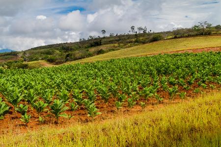 Tobacco farm in Santander department of Colombia Reklamní fotografie