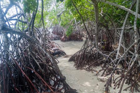 mangroves: Mangroves on Mucura island of San Bernardo archipelago, Colombia