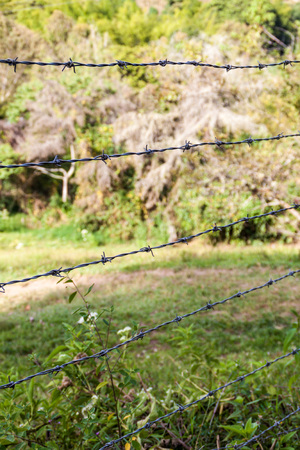 cattle wire: Barbed wire fence protecting a pasture