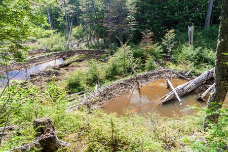 tierra: Beaver dams at Tierra del Fuego, Argentina Stock Photo