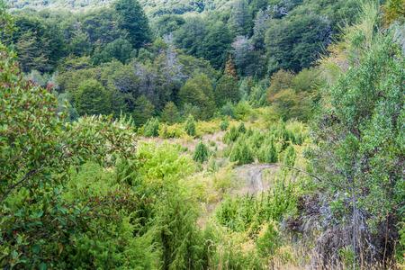 municipal: Forest in Municipal Park Llao Llao near Bariloche, Argentina