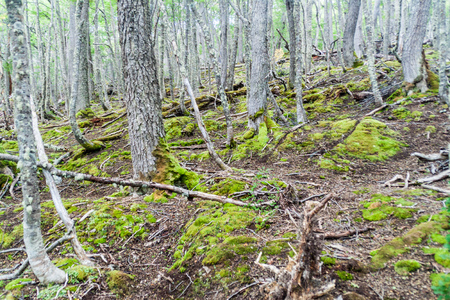 tierra: Forest in Tierra del Fuego, Argentina