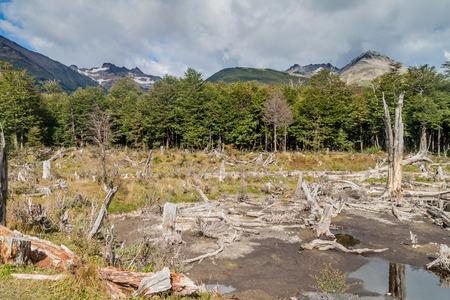 tierra del fuego: Countryside at Tierra del Fuego, Argentina