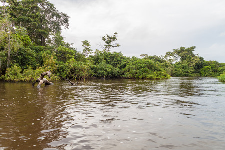 lining: Trees lining river Yacuma in Bolivia Stock Photo