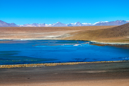 lipez: Flamingos in Laguna Collpa lake on bolivian Altiplano Stock Photo
